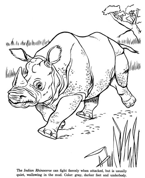 india animals coloring pages indian rhinoceros drawing and coloring page animal