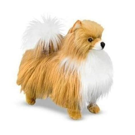 where did pomeranians come from the pomeranian a cuddly and spirited pomeranian dogs a lot