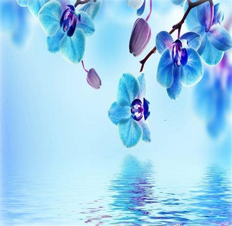 imagenes bellas fondo de pantalla imagenes de paisajes con flores para fondo de pantalla
