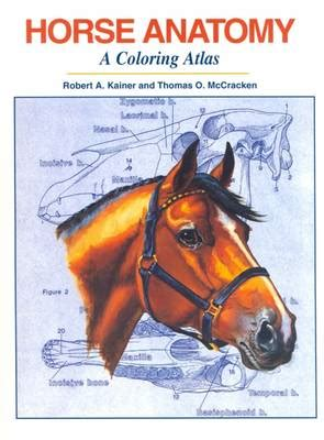 anatomy colouring book waterstones essentials of veterinary anatomy physiology by