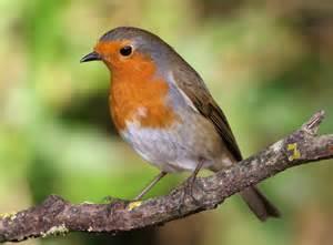 week end de comptage printanier des oiseaux des jardins