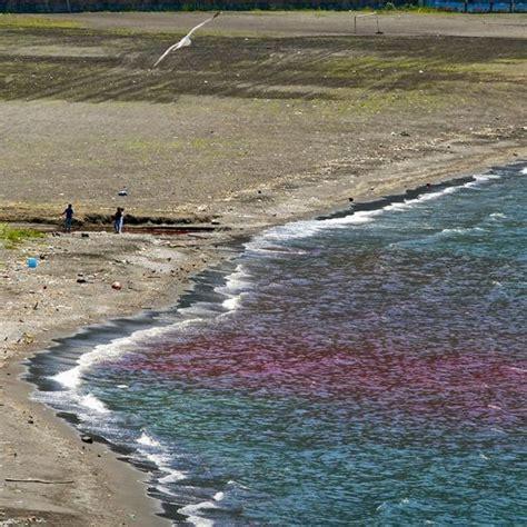 capitaneria di porto napoli gente di mare gente di stabia una chiazza rosso sangue nel mare di stabia