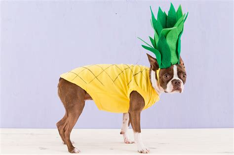 pineapple for dogs 25 creative costumes for dogs nobiggie