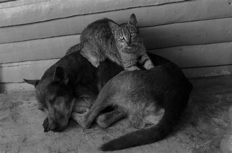 cosa fare in caso di morte morte e gatto
