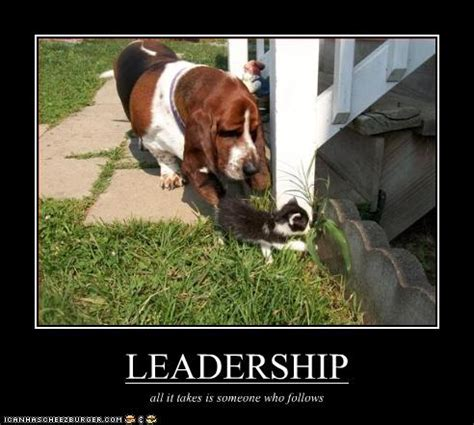 Leadership Memes - justacargal hump day humor lol catz