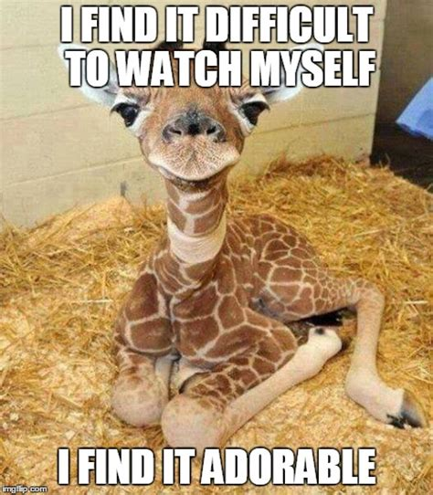 Funny Giraffe Memes - giraffe meme i find it difficult to watch myself picsmine