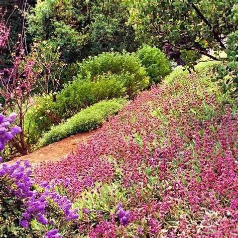 17 best images about plants for banks hillsides and slopes on pinterest raised beds hillside