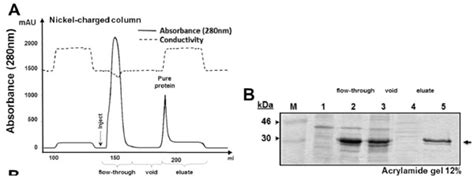 j protein expression purification preparation of specific polyclonal antibody against the