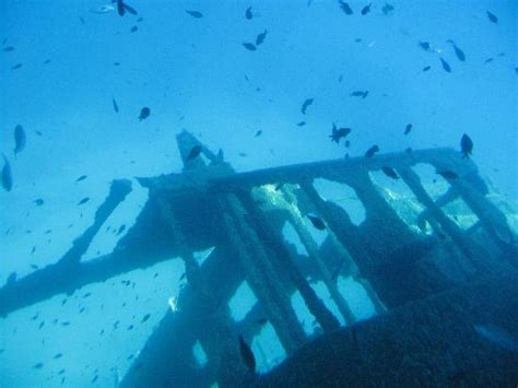 glass bottom boat elba a sunken ship viewed from the glass bottom boat picture