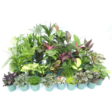 easy care indoor plants our range the widest range of tools lighting