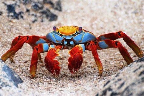 colorful crab what a colorful crab aquatic creatures
