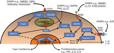 pattern recognition receptors multiple sclerosis ligation of pattern recognition receptors prrs by damage