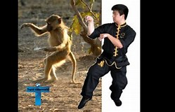 Image result for Most Deadly Martial Arts Styles