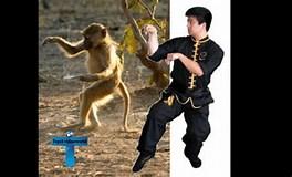 Image result for Most Lethal Martial Art