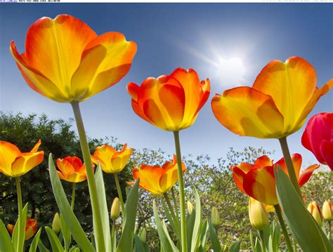 Blooming For by Hotel R Best Hotel Deal Site