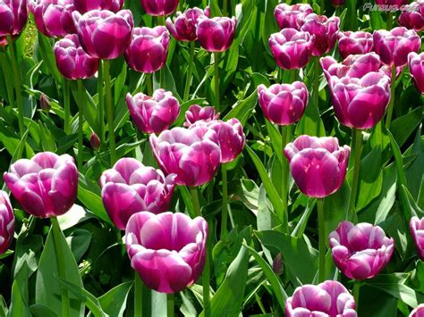 Funzug Com Beautiful Colorful Flowers Wallpapers Pictures Of Colorful Flowers