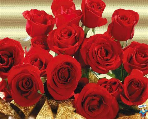 foto fiori rosse foto rosse 27 foto in alta definizione hd