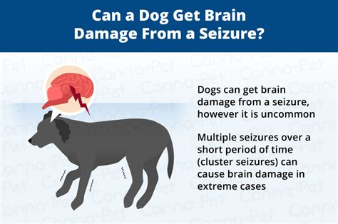 what to do after your has a seizure can seizures in dogs cause brain damage canna pet