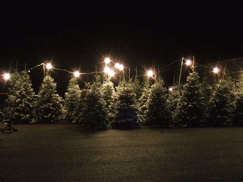 christmastree lot utah tree sales hodges farm