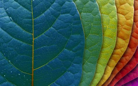abstract leaves multicolor nature rainbows walldevil