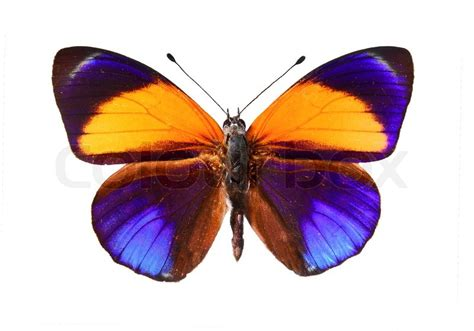 colorful butterfly a colourful butterfly stock photo colourbox