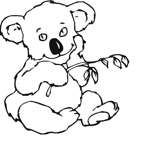 realistic koala coloring pages realistic koala pages coloring pages