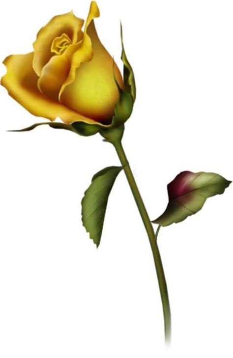 yellow rose bud tattoo yellow bud clip gallery free clipart picture