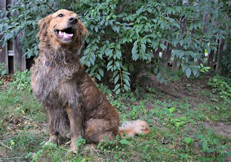 How To Put A Bathtub In Wordless Wednesday Dirty Devious Dog