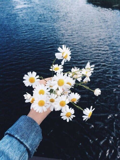 imagens tumblr flores bright daisies daisy flowers happiness happy hipster