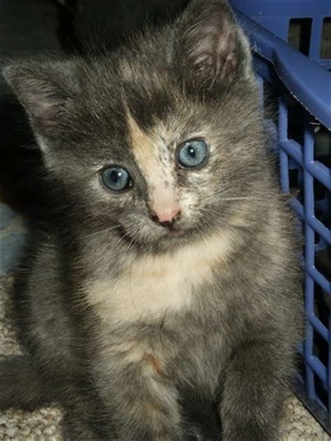 fleas on newborn puppies how to use lemon to kill fleas on newborn kittens cats ehow