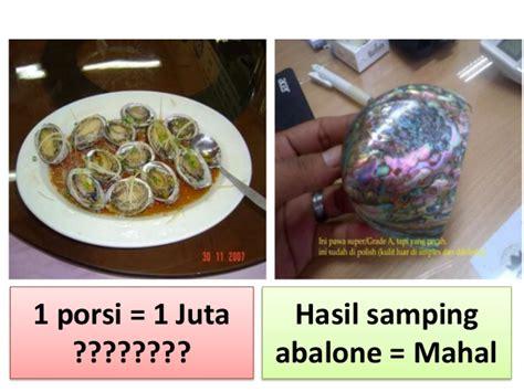 Kerang Abalone prospek budidaya kerang abalon