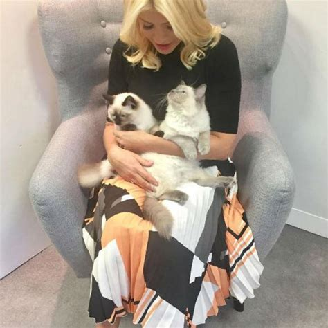 cat peeing on the couch holly willoughby s cat pees on sofa