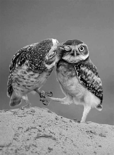 owl lovers true owls love pretty animals pinterest