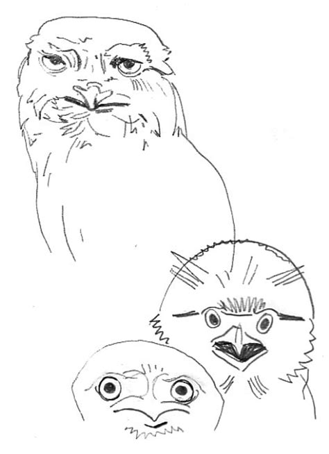 tawny owl coloring page baby bib coloring pages coloring pages