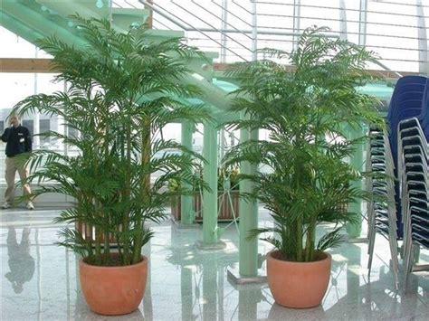 Piante Ornamentali Da Salotto piante ornamentali finte piante finte caratteristiche