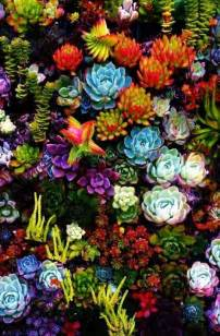 colorful cactus succulents i the bright colors floral hunters