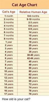cat age chart cat s age relative human age 1 month 5 6
