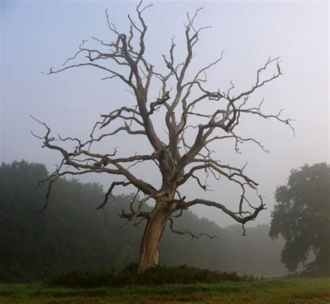 Search For Dead Dead Tree Images Search