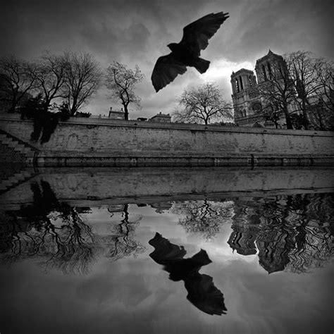 imagenes tiernas a blanco y negro incre 237 bles fotos blanco y negro taringa