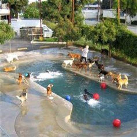 backyard dog pool dog pools on pinterest dog pools pools and dog pond