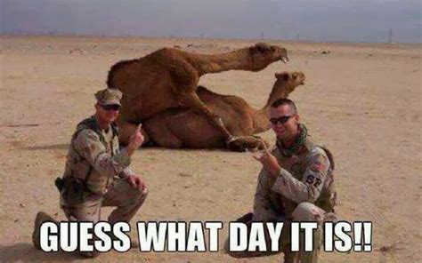 Camel Hump Day Meme - picz i like