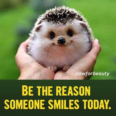 cute baby hedgehog smiling love journey to complete wellness