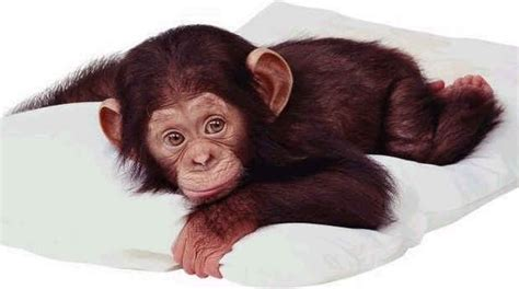 baby monkeys   callmeiris   blog
