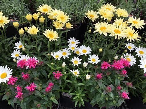 garden resources and trends fall blooming perennials more summer garden tips creek side gardens