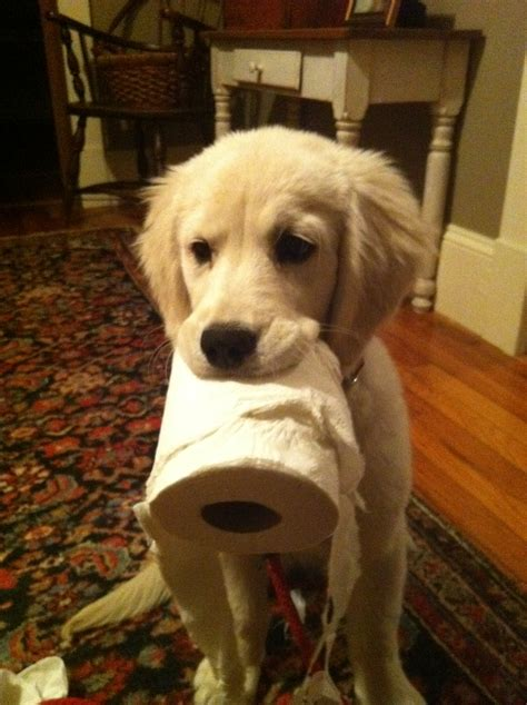 when to stop feeding puppy food why you should stop feeding your commercial food