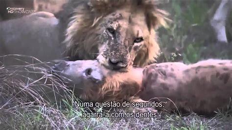 161 top 10 ataques de animales a personas imagenes fuertes videos de animales ataques de animales salvajes ataque