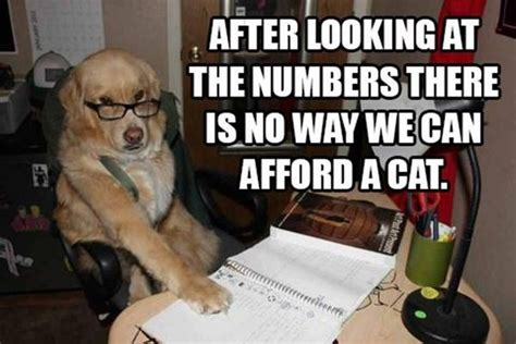 Accountant Dog Meme - funny financial dog meme 07