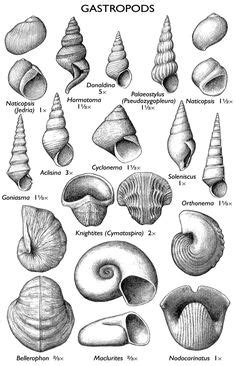 tattoo prices wollongong 1000 images about fossils on pinterest fossil geology