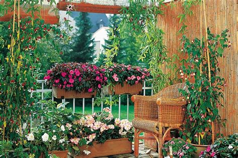 vaso per piante grasse vasi per piante le soluzioni per le fioriture in vaso