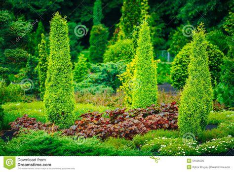 green tree landscaping garden landscaping design flower bed green trees stock